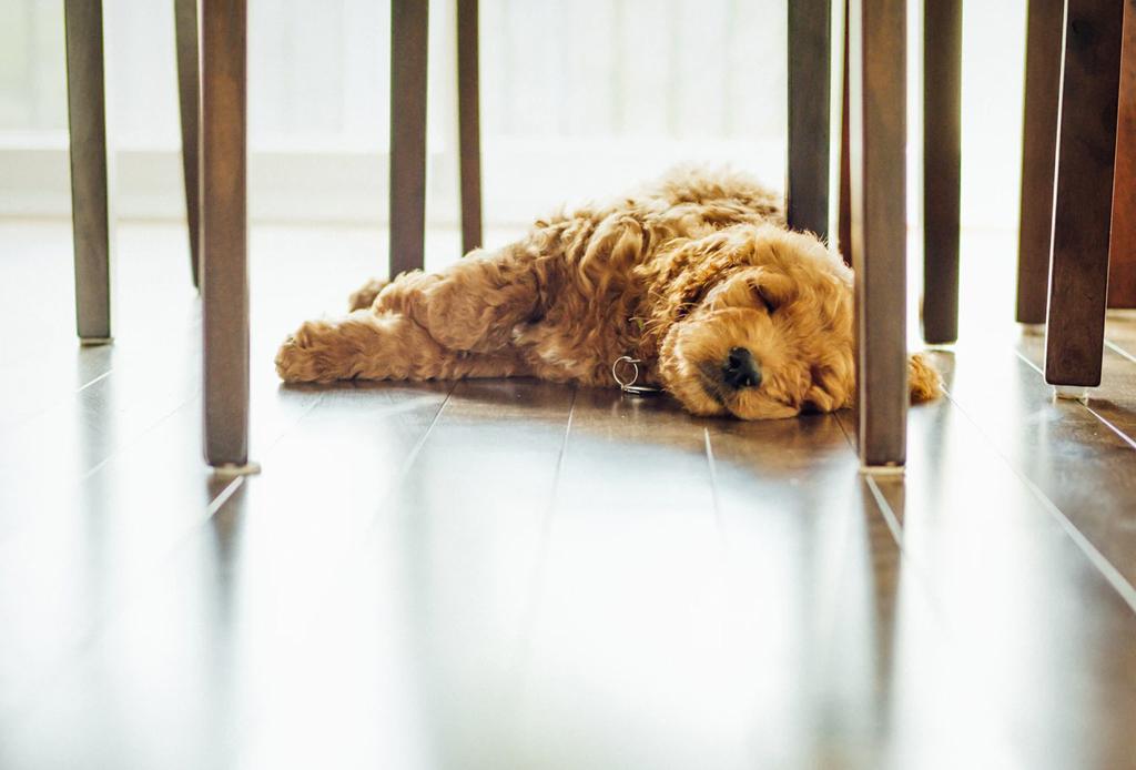 Convierte tu departamento en el lugar ideal para tu perro - pisos-ceramicos-perro-1024x694