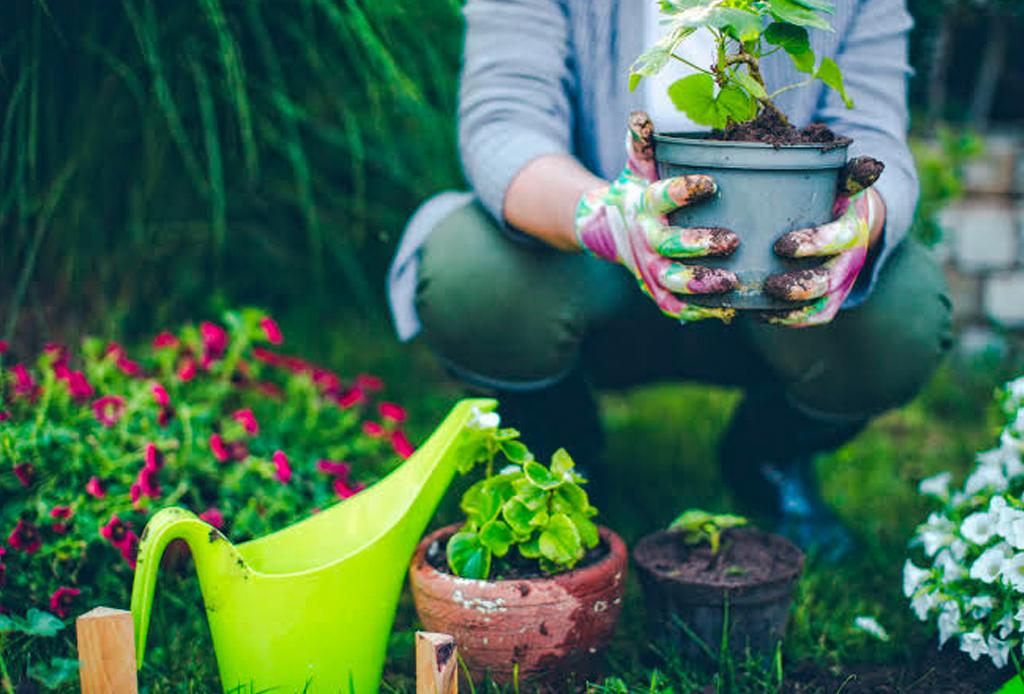 Música para escuchar mientras haces jardinería