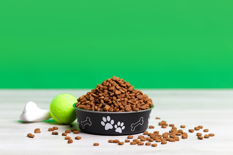 ¡A tan solo un click! Los servicios online para tu perro - comida-perros