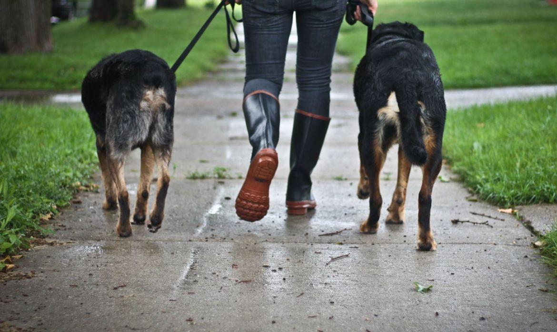 ¡A tan solo un click! Los servicios online para tu perro - pasea-perros