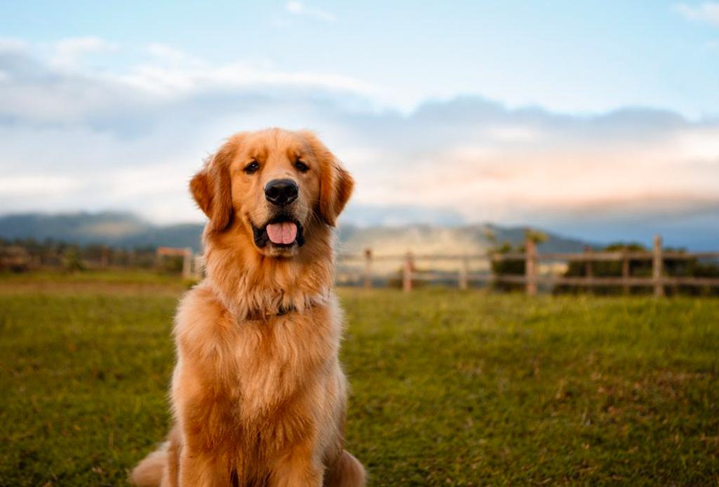 Las razas de perro ideales para viajeros, elige la mejor para ti - perros-viajeros-5-1024x694