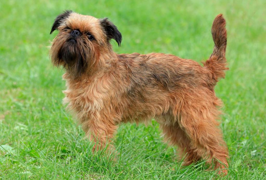 Las razas de perro ideales para viajeros, elige la mejor para ti - perros-viajeros-7-1024x694