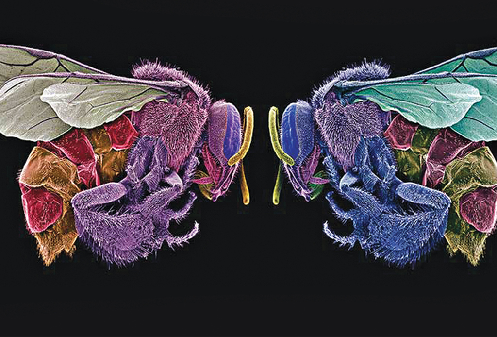 Enero 2020: estas son las exposiciones abiertas para el mes - el-arte-de-comer-insectos