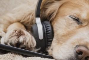Spotify tiene la playlist perfecta para acompañar a tu mascota cuando no estás en casa