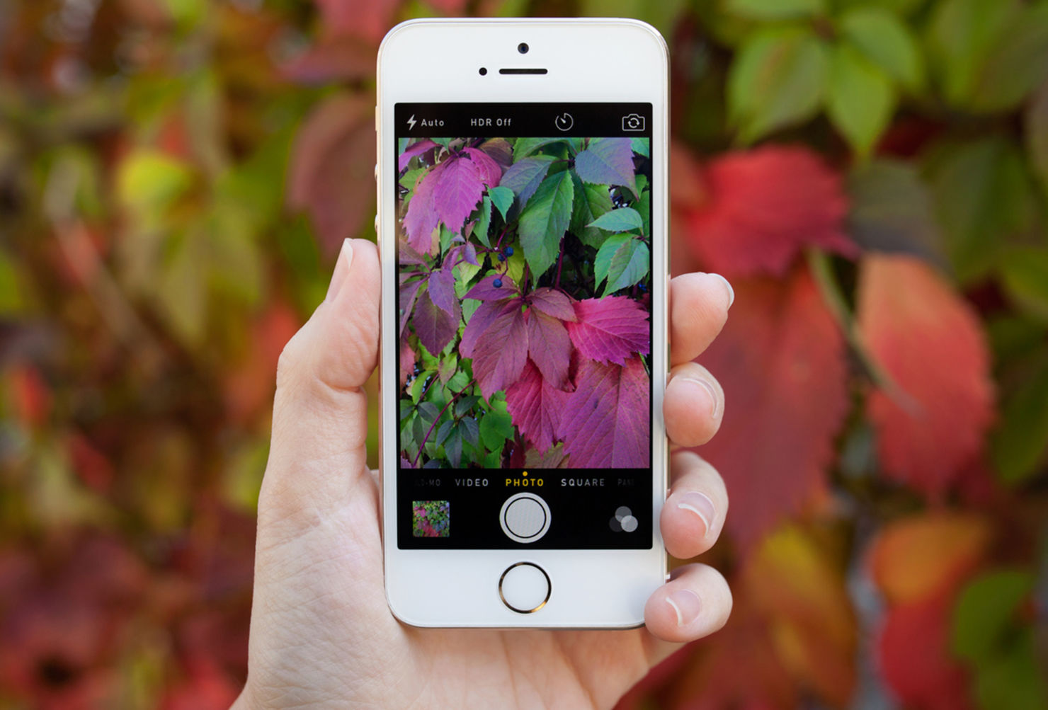 Apps para aprender e identificar todas las plantas a tu paso