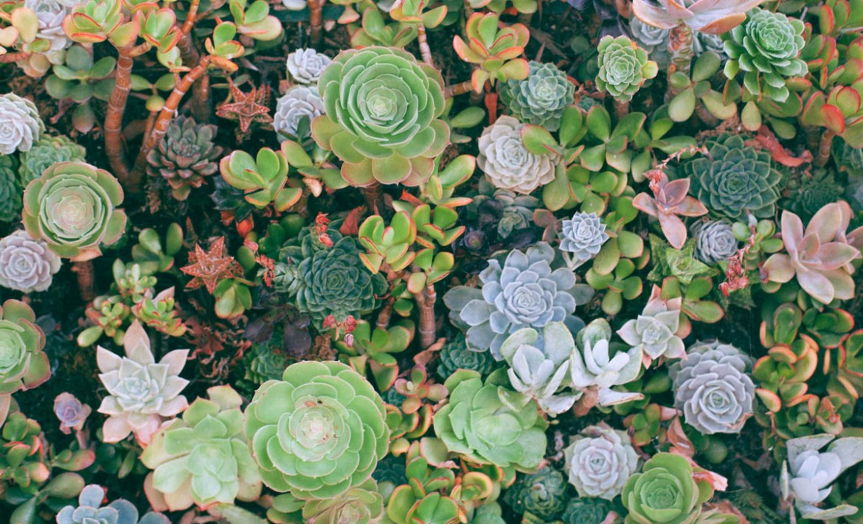 ¿Quieres entender el mundo de las plantas? Estas son las mejores para principiantes - plantas-principiantes-suculentas