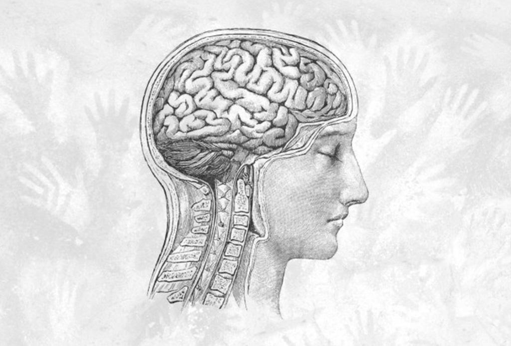 ¿Se está encogiendo nuestro cerebro? - cerebro-2
