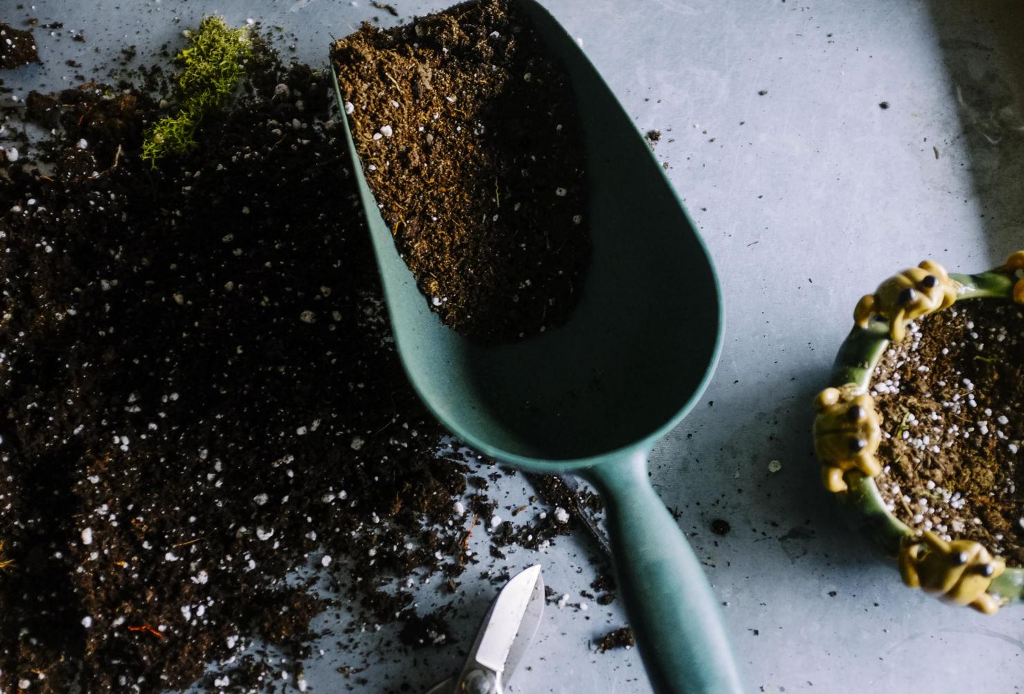 Prepara fertilizantes caseros para mantener el verde de tus plantas