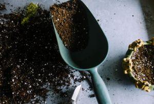 Aprende a preparar fertilizantes caseros para mantener el verde de tus plantas