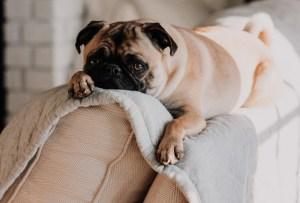 ¿Cómo le afecta la cuarentena a tu mascota?