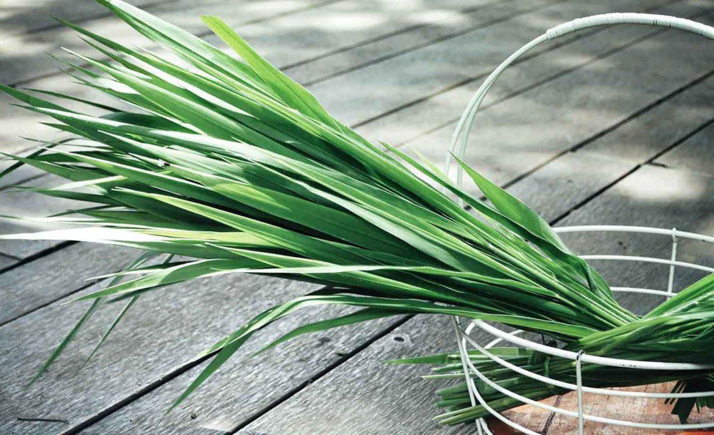 ¡Relájate! Estos aromas es lo que necesitas en tu casa - vetiver-planta