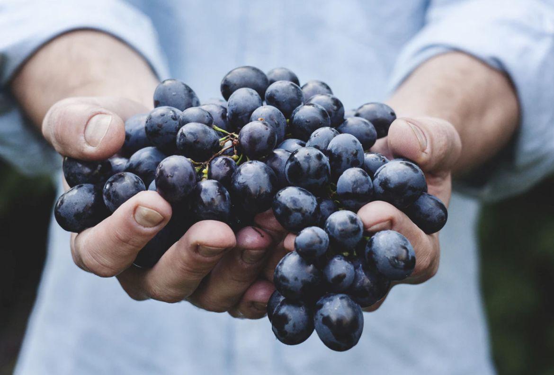 ¡Atención amantes del vino! Estos tips te convertirán en un sommelier desde casa - consejos-catador-vinos