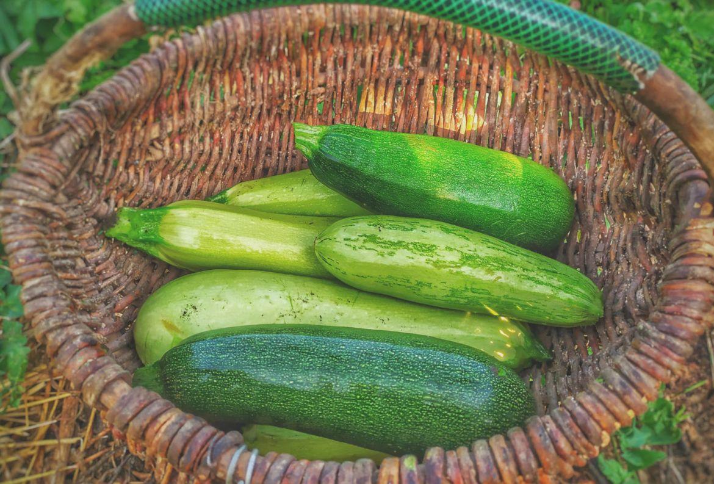 Si quieres hacer tu huerto casero, estas son las frutas y verduras más fáciles de cosechar - frutas-y-verduras-faciles-de-cosechar-calabazas