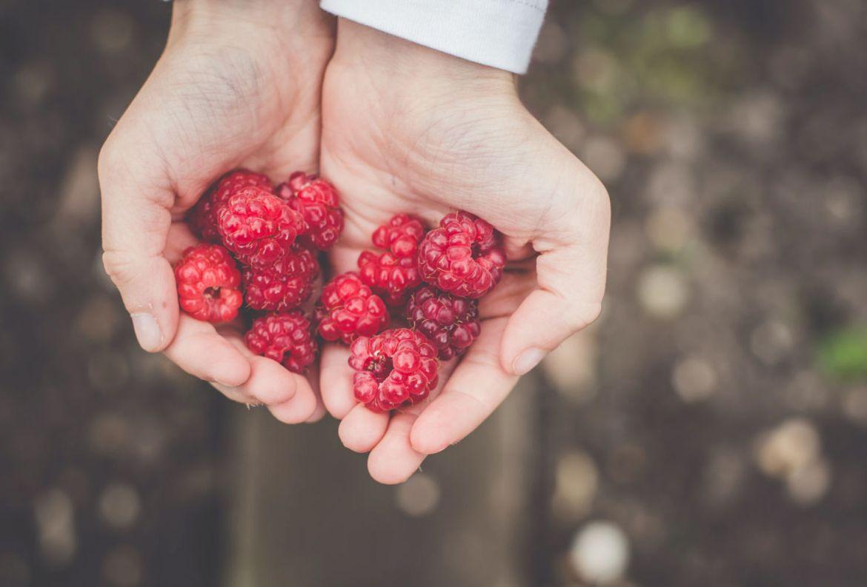 Si quieres hacer tu huerto casero, estas son las frutas y verduras más fáciles de cosechar - frutas-y-verduras-faciles-de-cosechar-frambuesas