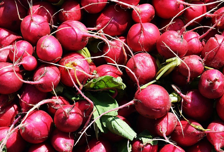 Si quieres hacer tu huerto casero, estas son las frutas y verduras más fáciles de cosechar - frutas-y-verduras-mas-faciles-de-cosechar-rabanos