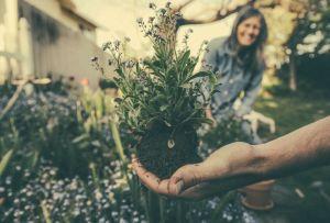 El paso a paso para trasplantar una planta a otra maceta