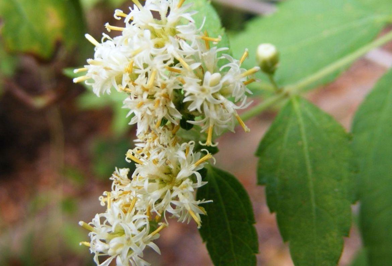 ¿Has escuchado sobre los onirógenos? Conoce más sobre estas plantas que crean sueños lúcidos - hierba-de-los-suencc83os
