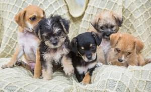 ¡Tenemos buenas noticias! La adopción de perritos crece cada día más