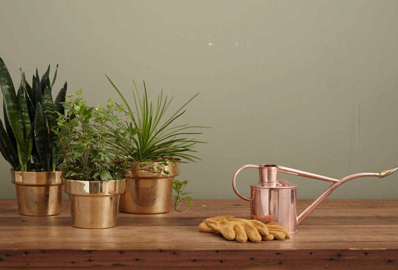 El paso a paso para trasplantar una planta a otra maceta - plantas