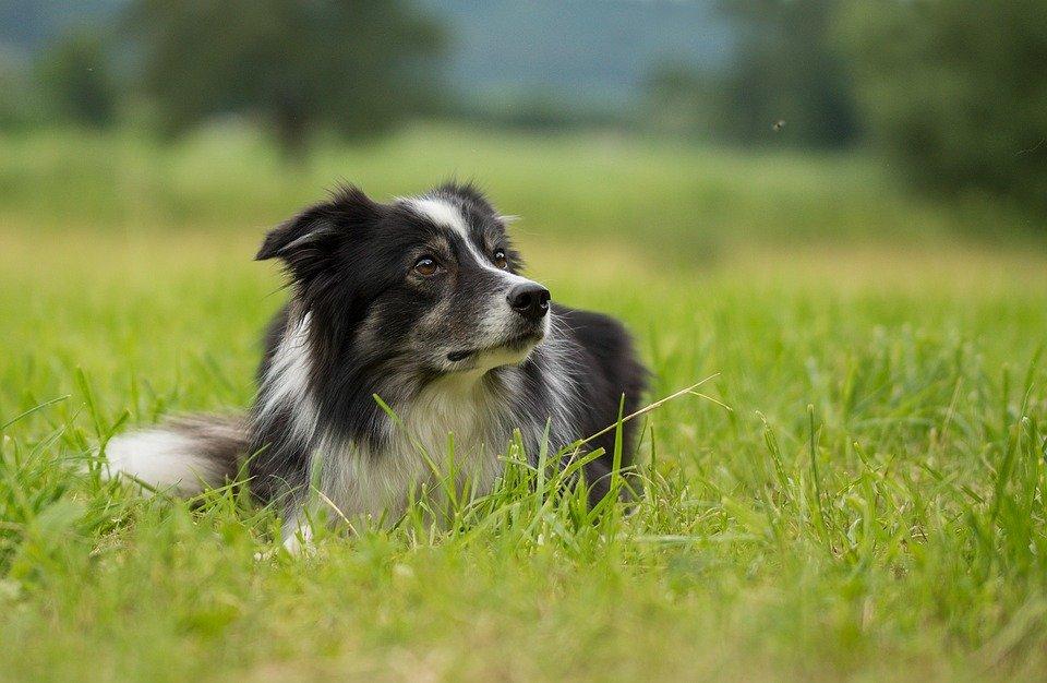 Estos son los perros más viejos de la historia - bramble