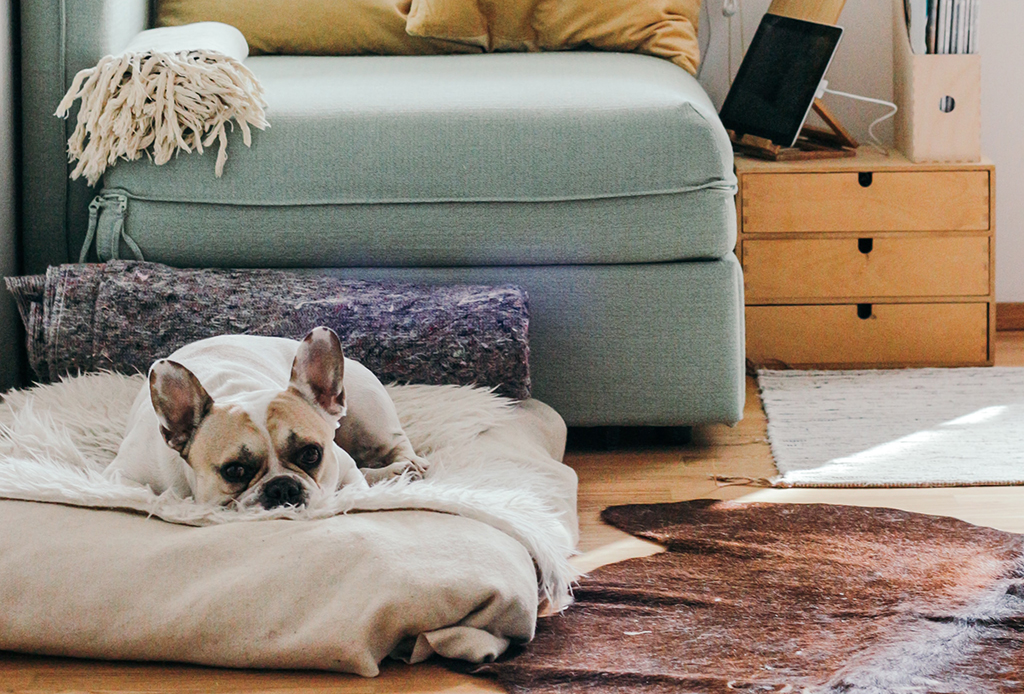 ¿Cómo preparar a tu mascota para cuando vuelvas a las actividades? - espacio-perro-2