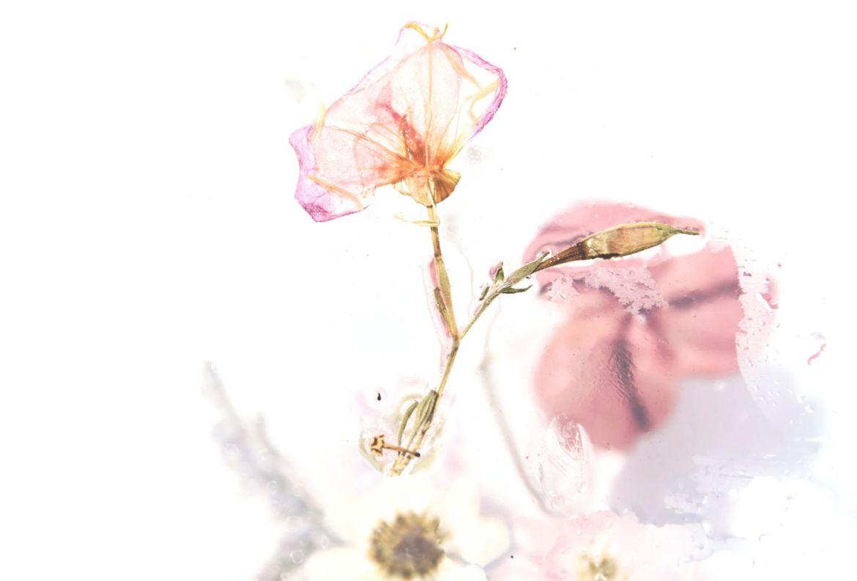 Cómo hacer un hermoso cuadro con flores secas - flores-secas-manualidades-1