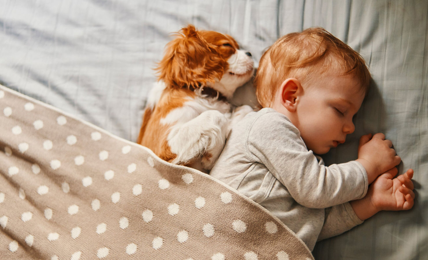 Así debes preparar a tu mascota ante la llegada de un bebé a casa