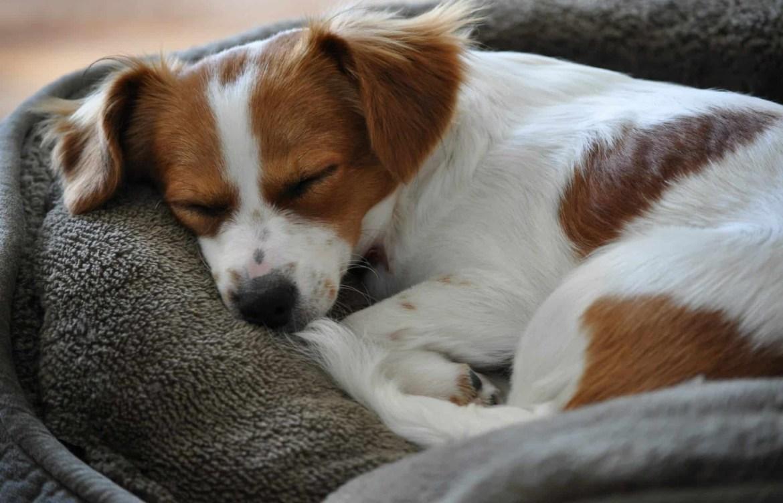 Conoce los increíbles beneficios de pasear a tu perro - descansar