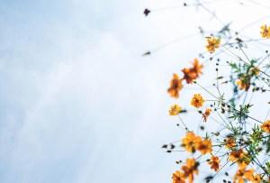 ¿Qué significa realmente 'karma'?