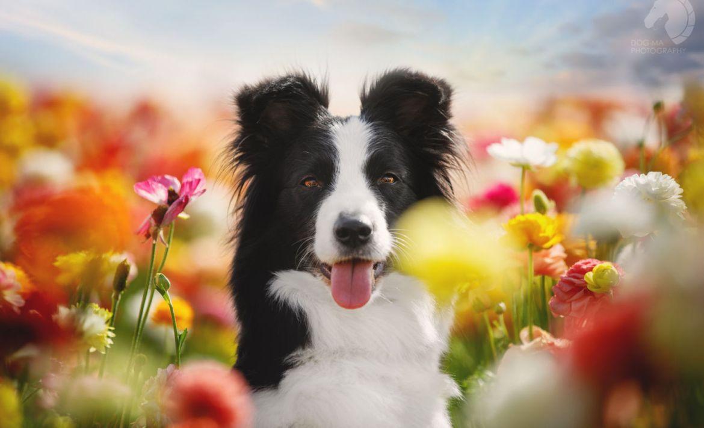 Trucos para tomarle fotografías perfectas a tus mascotas - perro-flores