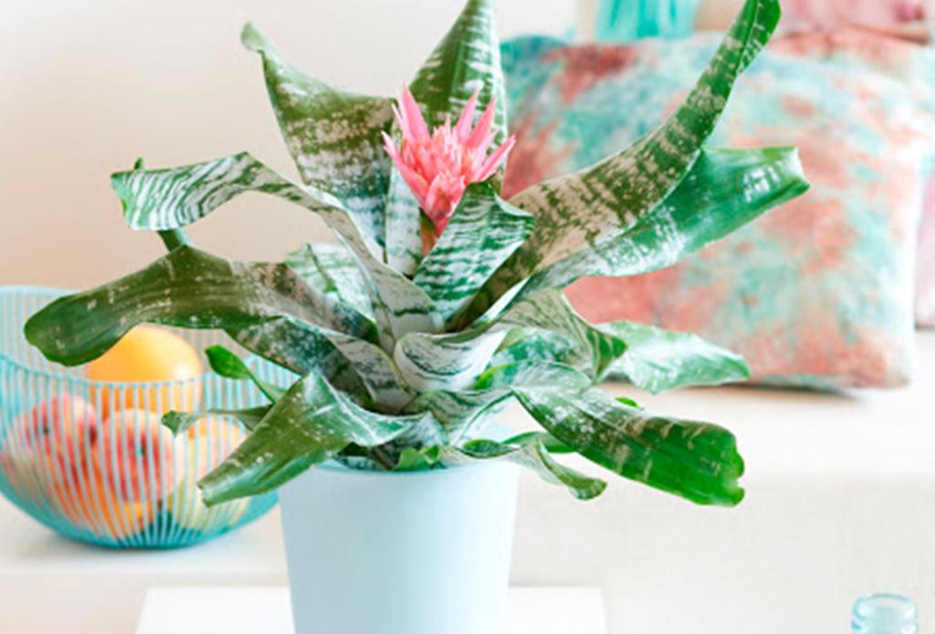 6 plantas ideales para espacios con poca luz natural - plantas-poca-luz-1
