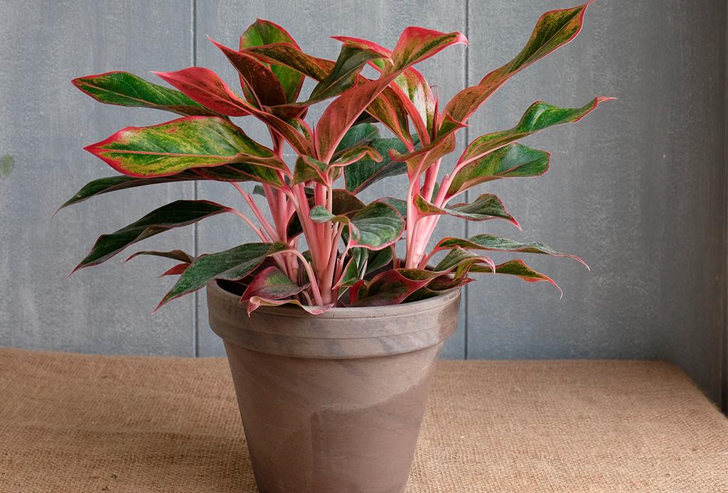6 plantas ideales para espacios con poca luz natural - plantas-poca-luz-2