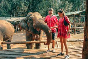 No montes elefantes en tus próximos viajes