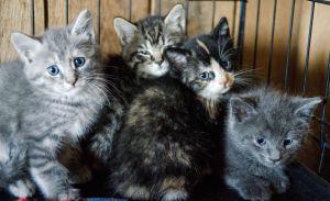 Refugios donde puedes adoptar gatos en la CDMX