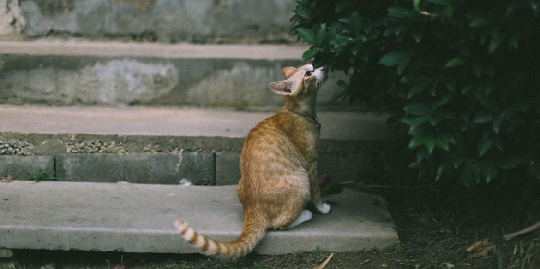 Cómo entender el lenguaje corporal de tu gato - leguaje-corporal-gatos-2