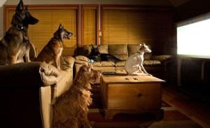 Películas que puedes ver con tu perro y él amará