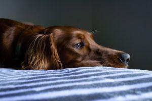 Te decimos cómo ayudar a tu perro a superar sus miedos ¡toma nota!