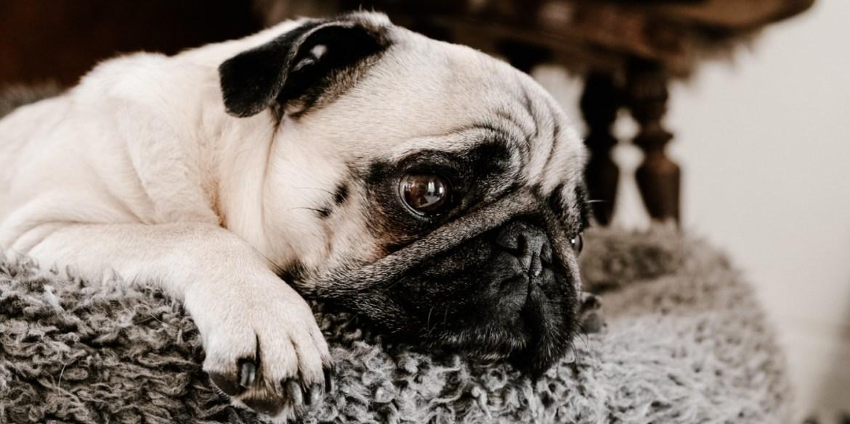Te decimos cómo ayudar a tu perro a superar sus miedos ¡toma nota! - ayudar-a-tu-perro-a-superar-miedos