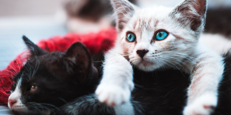 Te platicamos la importancia de esterilizar a tus animales de compañía - esterilizar-a-tus-animales-1
