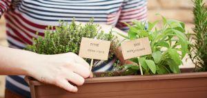 Inspírate con este board y crea identificadores cool para tus plantas