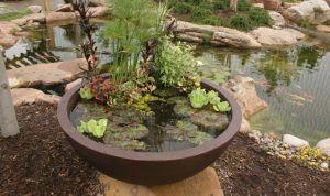 Aquí te decimos cómo hacer tu propio jardín acuático