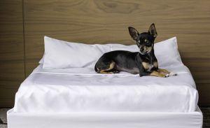 Estos hoteles pet-friendly para tu siguiente viaje, son la mejor opción
