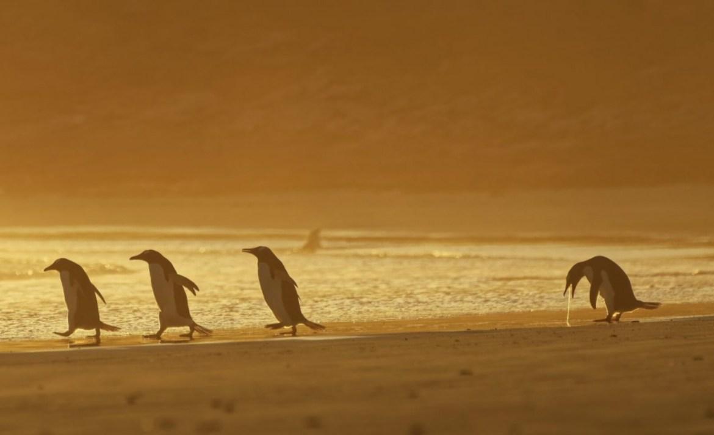 ¿Quieres reír? Estos son los finalistas del Comedy Wildlife Photo 2020 - wildlife-photo-pinguino