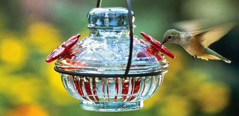 Los bebederos para colibríes más bonitos para tener en casa - diseno-sin-titulo-8-2