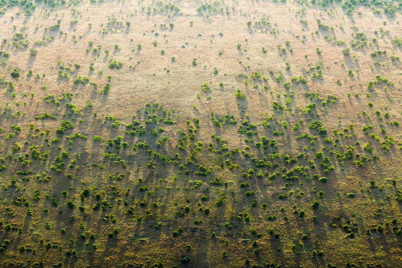 La gran muralla verde que está combatiendo el cambio climático - gran-muralla-verde-1480x987