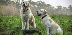 ¿Qué cuidados debe tener un perro anciano? 7 formas de darle amor