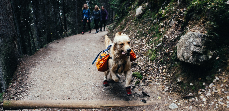 Gadgets para viajar con tus mascotas ¡Te harán la vida más fácil!