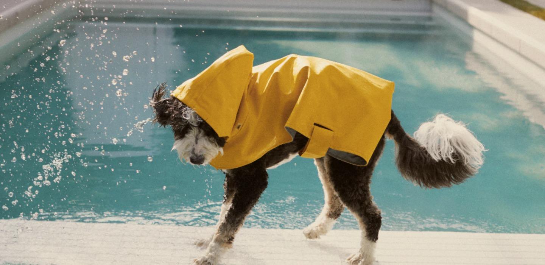 Zara sacará una nueva colección para perros ¡Morimos por tenerla!
