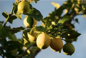 ¿Qué son los 12 sucios? Lo que necesitas saber sobre la comida orgánica