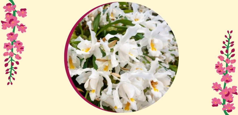 Tipos de orquídeas más populares que tienes que conocer - sabrina-26-1